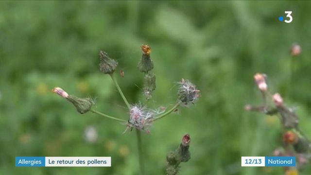 Allergies : les pollens sont de retour