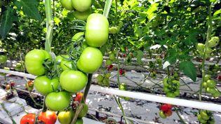 """Latechnique des serres chauffées""""ne concerne que 0,2% des surfaces en légumes bio en 2017"""",selon Thierry Coué, vice-président de la FNSEA (photo d'illustration). (CLAUDE PRIGENT / MAXPPP)"""