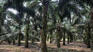L'huile de palme est une huile végétale extraite du fruit d'un palmier. (MOHD RASFAN / AFP)