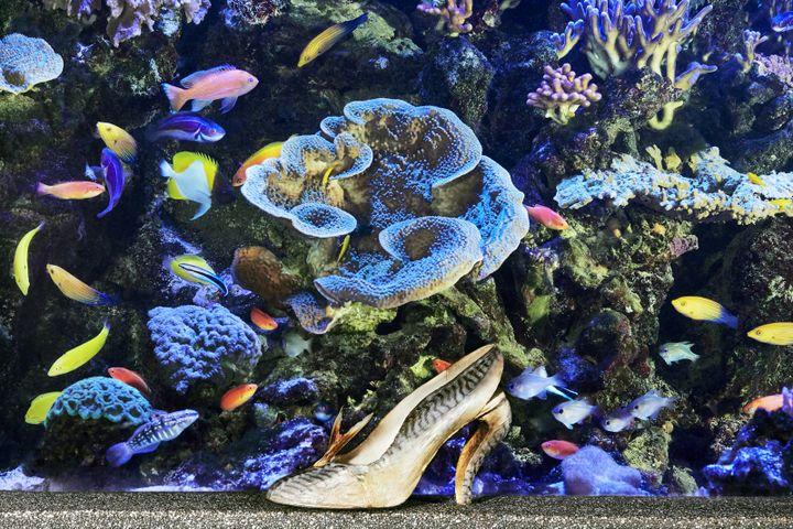 Soulier maquereau datant de 1987 devant l'Aquarium du Palais de la Porte Dorée (CHRISTIAN LOUBOUTIN)