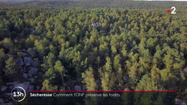 Environnement : les forêts françaises en danger à cause du réchauffement climatique