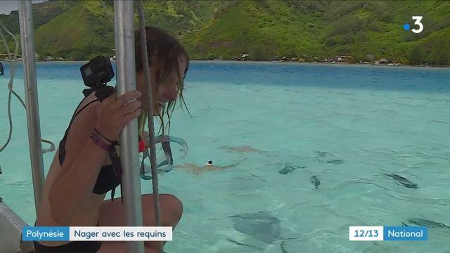Polynésie : nager avec les requins