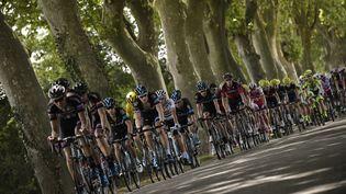 Le peloton du Tour de France lors de la 13e étape, vendredi 17 juillet 2015. (LIONEL BONAVENTURE / AFP)