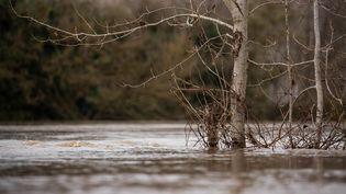 Un arbre immergé le long d'une berge de la Garonne, à Tonneins, dans le Lot-et-Garonne, le 13 décembre 2020. (QUENTIN FALCO / HANS LUCAS / AFP)