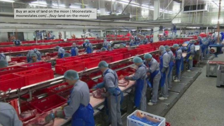 Plus de 700 personnes ont été testées positives à la Covid-19 dans un abattoir allemand. En direct de Berlin (Allemagne), le journaliste François Beaudonnet livre ses analyses sur ce nouveau foyer épidémique (FRANCE 3)