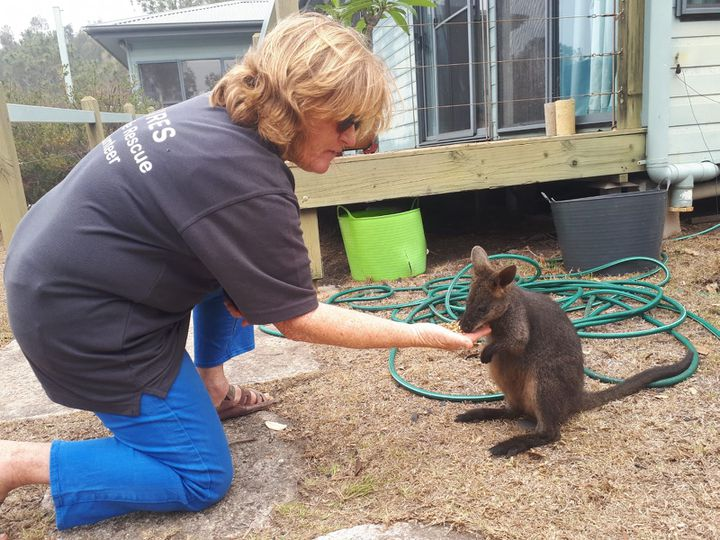 Des volontaires de l'association Wires recueillent des animaux blessés par les incendies pour les soigner. Ici, Julie donne à manger à un kangourou, dans le parc national de Meringo (Nouvelle-Galles-du-Sud). (GAËLE JOLY / FRANCE-INFO)