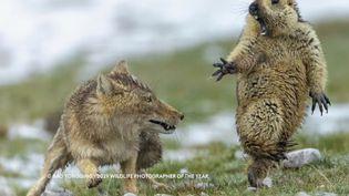La photo lauréate du prix de la photo animalière de l'année, remis à un photographe chinois. (France 2)