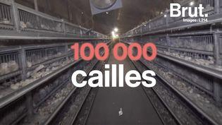 Dans l'élevage Drôme Cailles dans le sud-est de la France, l'association a filmé les conditions de vie de ces volailles pour condamner le mauvais traitement qu'elles subissent. (BRUT)