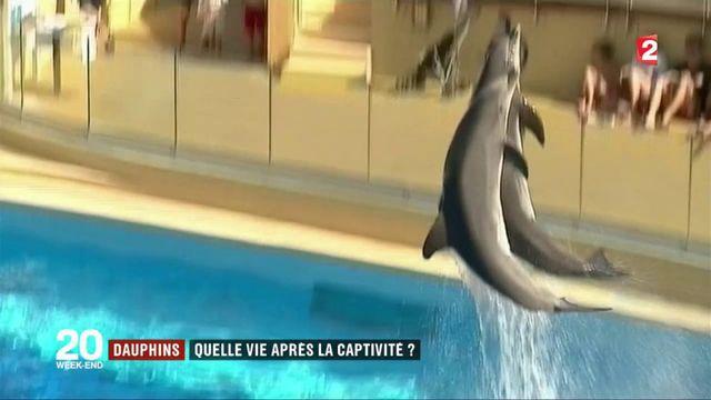 Dauphins : quelle vie après la captivité ?