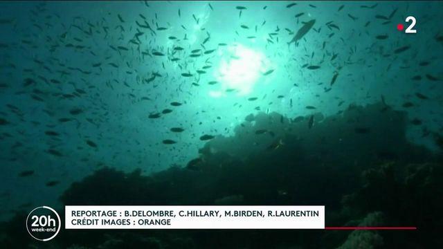 Espionnage : la guerre des abysses avec la surveillance des câbles sous-marins de télécommunication