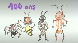 Une synthèse de 73 études affirme que les insectes pourraient disparaître de notre planète d'ici 100 ans. Pourtant, sans insecte, la diversité n'existerait quasiment pas. (FRANCEINFO / RADIOFRANCE)