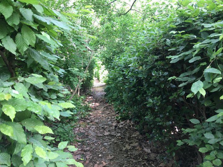 La nature a repris ses droits dans le parc de Bercy dans le 12e arrondissement de Paris, fermé au public en raison du confinement, le 8 mai 2020. (FARIDA NOUAR / RADIO FRANCE)
