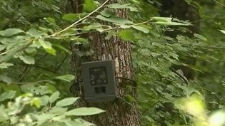 Près de Nancy (Meurthe-et-Moselle), des appareils photo ont été installés dans les forêts pour repérer les pollueurs. De lourdes sanctions sont prévues. (FRANCE 2)