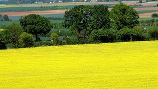Un champ de colza dans les Deux-Sèvres, l'un des départements perdants de la nouvelle carte des zones agricoles défavorisées. (MAXPPP)