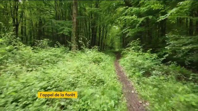 Coronavirus : les forêts interdites, les Français s'impatientent