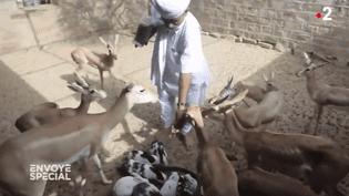 """La biodiversité est leur religion : """"Envoyé spécial"""" à la rencontre des Bishnoïs du Rajasthan (ENVOYÉ SPÉCIAL  / FRANCE 2)"""