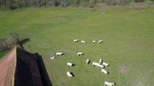 Drones, caméras, sondes, data... une nouvelle génération d'agriculteurs n'a pas peur de convertir le monde paysan aux nouvelles technologies. (FRANCE 2)