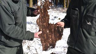 Des arbres sont malades dans les forêts des Ardennes, le 8 février 2018. (JEAN-LUC FLEMAL / BELGA MAG / AFP)