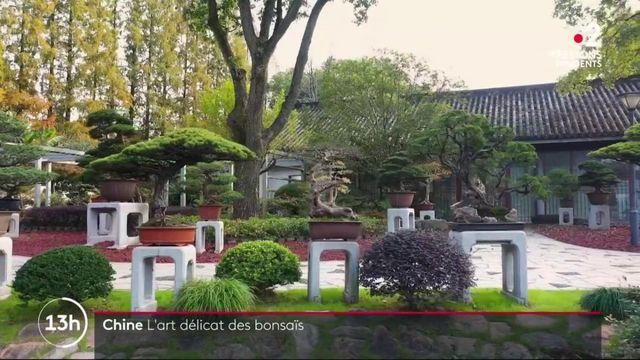 Le bonsaï, un nom japonais pour un art venu en Chine
