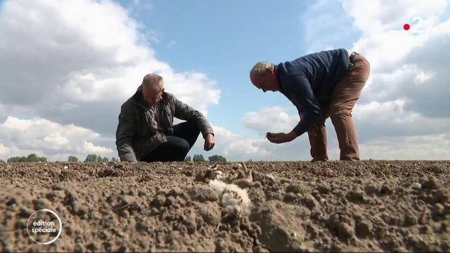 Pomme de terre : les producteurs croulent sous les stocks