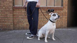Des ultraconservateurs iraniens souhaitent punir lourdement les propriétaires de chiens, un animal qu'ils considèrent comme impur. (FUSE / GETTY IMAGES)