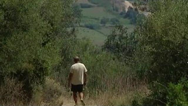 Xylella Fastidiosa : la bactérie tueuse d'oliviers s'attaque à la Corse