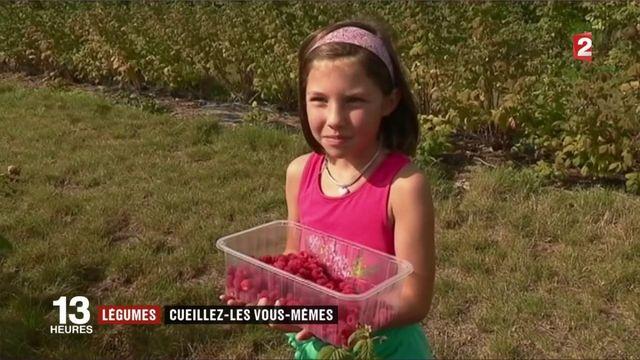 Consommation : le boom de l'auto-cueillette des fruits et légumes