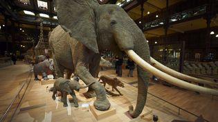 La Grande galerie de l'évolution au Museum d'Histoire naturelle, à Paris, le 24 décembre 2009. (MORANDI BRUNO / AFP)