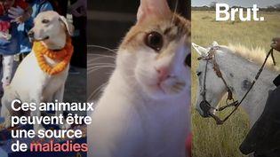 VIDEO. Quelles sont les maladies que nos animaux de compagnie peuvent nous transmettre ? (BRUT)