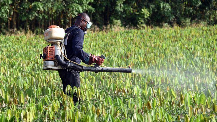 Un homme pulvérise des pesticides à Toupa (Côte-d'Ivoire), le 30 novembre 2015. (TALAR KALAJIAN / AFP)