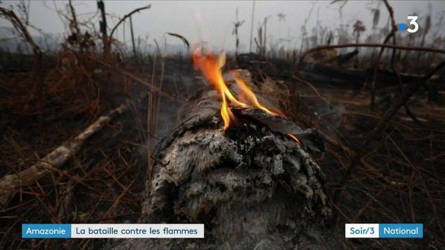 Amazonie : la forêt ravagée au Brésil et en Bolivie
