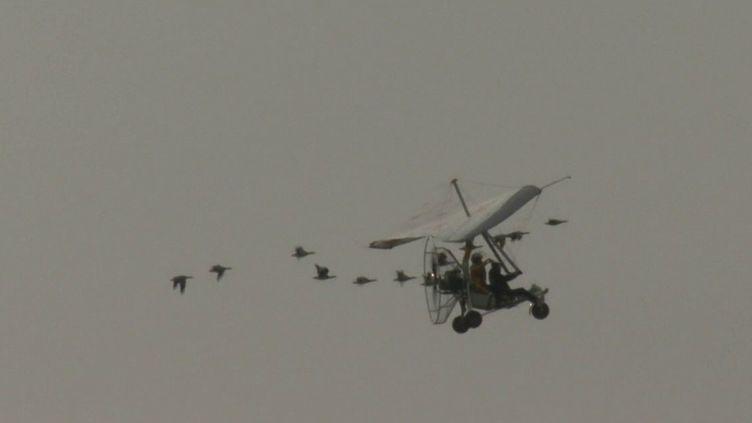 Haute-Savoie : voler avec les oies au-dessus du lac d'Annecy (France 3)