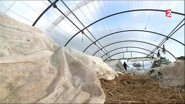 Agriculture : la permaculture, une autre manière de faire du maraîchage