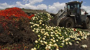 (A Nijar, Andalousie, en juin 2011 © REUTERS/Francisco Bonilla)