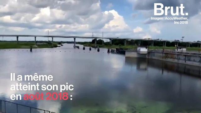 Cela dure depuis novembre 2017. La Floride connaît actuellement une prolifération d'algues toxiques qui démident la faune sous-marine. Explications.