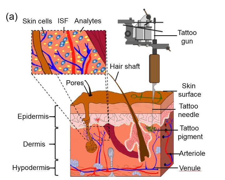 Le schéma du tatouage, élaboré par une équipe de chercheurs allemands, pour évaluer des caractéristiques physiques. (ALI YETISEN)