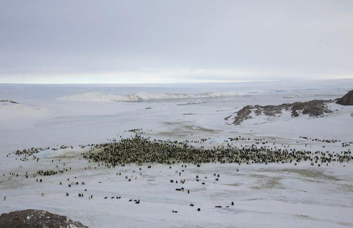 Une colonie de manchots empereurs près de la base Dumont-d'Urville, le 10 avril 2012 en terre Adélie. (REUTERS)