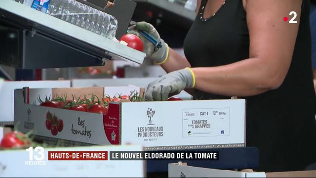 Hauts-de-France : une serre gigantesque pour produire des tomates