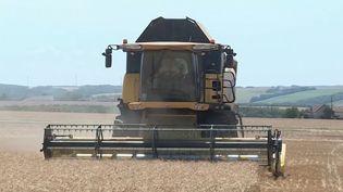 Les producteurs de blé connaissent le désarroi.Cetété, les moissons s'achèvent partout en France, et c'est l'une des pires récoltes depuis 30 ans. (France 3)