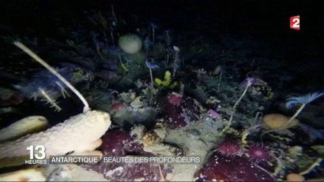 Antarctique : beautés des profondeurs