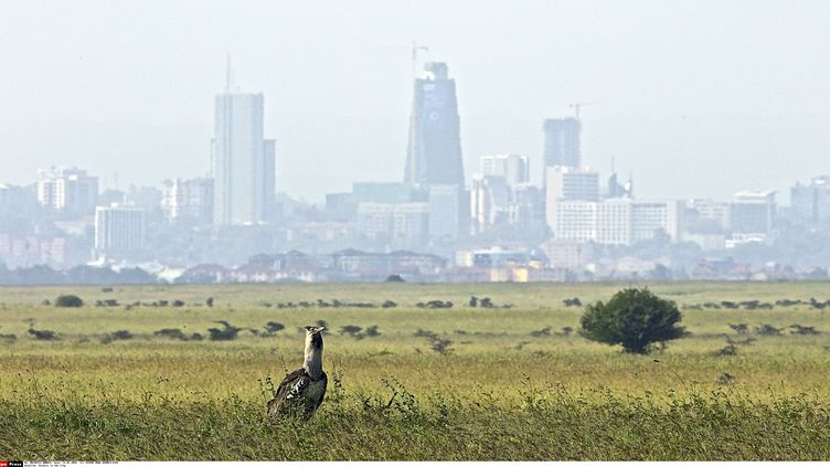 La ville de Nairobi dans la brume dûe à la chaleur. (CATERS NEWS AGENCY/SIPA / CATERS NEWS AGENCY)