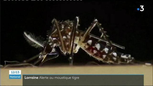 Nancy : opération porte-à-porte pour chasser le moustique-tigre