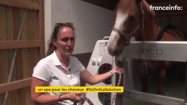 En Seine-Maritime, de la balnéothérapie de luxe pour les chevaux de sport