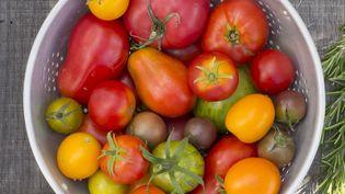 Avec le temps, les tomates ont perdu leur goût. Des scientifiques promettent aujourd'hui de le restaurer. (VIRGINIE QU?ANT / BIOSGARDEN)