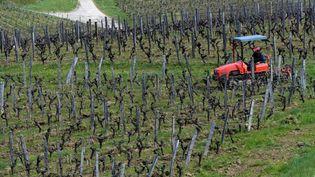 Un agriculteur dans ses vignes, le 9 avril 2021 dans le Jura. (MAXPPP)