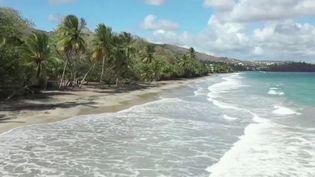 Sur les plages antillaises, les habitants semblent respecter les gestes barrières. Le bonheur de retrouver enfin la mer après deux mois de confinement est immense. (FRANCE 3)