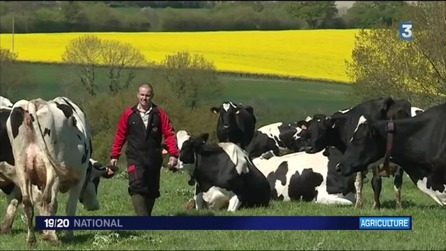 Agriculture : les producteurs de lait en crise abandonnent le métier