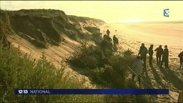 Ile de Ré : des sapins de Noël pour lutter contre l'érosion des dunes