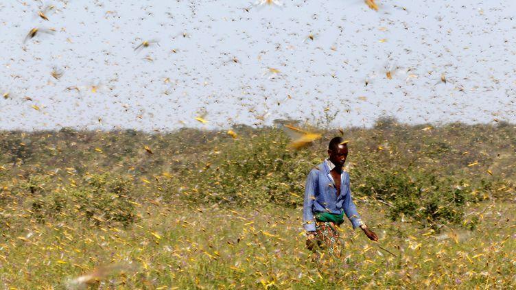 Un homme traverse un essaim de criquets, le 17 janvier 2020 à Samburu (Kenya). (NJERI MWANGI / REUTERS)