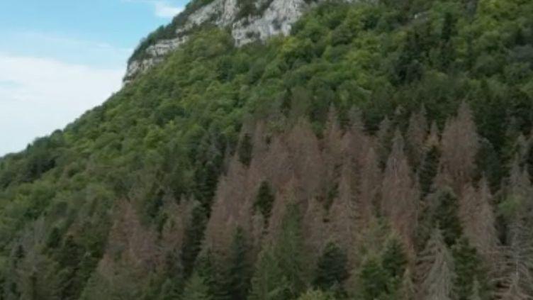 La sécheresse a des effets dramatiques sur l'environnement. Des milliers d'hectares de chênes, d'épicéas, de hêtres meurent de soif. Une catastrophe écologique qui doit alerter. (FRANCE 2)